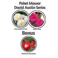 Paket Mawar Import David Austin Series