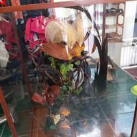 Pajangan Burung Cendrawasih Collection Awetan Asli Papua