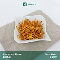 Cordyceps Flower / Jamur Bunga Cordyceps / Cong Cao Hua (虫草花 )