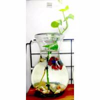 Komplt Set Aquarium Mini Vas Cupang dengan Tumbuhan Hidup dan Batu Hia