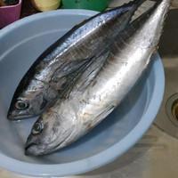 ikan baby tuna 300-500 gram beku kapal