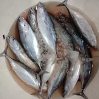 ikan tongkol segar 500 gram