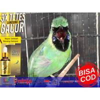 Optimax, Vitamin Burung, Vitamin Lovebird, Murai Batu Medan, Lovebird