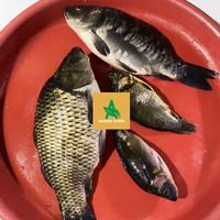 Ikan mas segar