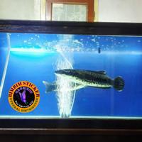background aquarium aquascape sticker putih hitam biru serbaguna