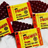 cacing beku MENEER bloodworm