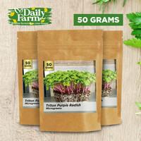 Benih Sayur Microgreens Triton Purple Radish Microgreen ( 50 Gram )
