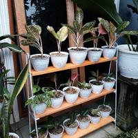 Rak Bunga Besi Kayu Rak Susun 3 Rak Minimalis Pot Bunga Hiasan Rumah