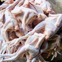 ayam pejantan segar utuh berat hidup 9 ons (BESAR)