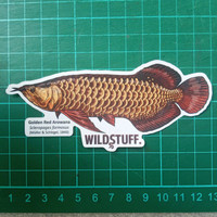 Sticker Wildstuff - Arowana Red Tail Golden RTG