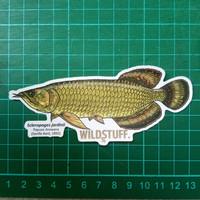 Sticker Wildstuff - Arowana jardinii Jardini Papuan Bonytongue