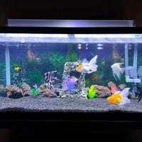 aquarium nisso bending 95x45x45