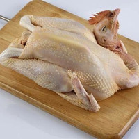 daging ayam kampung super murah