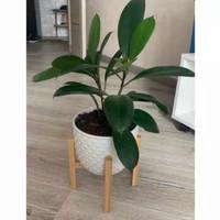 Rak Pot Kayu / Dudukan Pot Vas Bunga / Standing Pot 25x30
