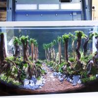 Promo !!! Aquarium Aquascape Full Set Design Tema Jungle Style 5