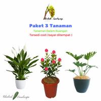 Paket 3 Tanaman Hias Hidup - Philodendron - Bunga soka - Peace Lily