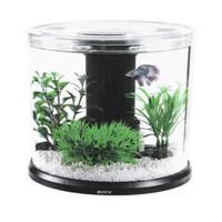Aquarium Cupang full set / soliter cupang full set / aquarium mini