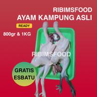 Ayam kampung potong asli Aka / Sentul ukuran 800 - 1.2KG fresh hidup