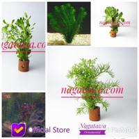 Paket 5 Pot Tanaman Aquascape  Low Co2