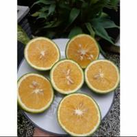 buah jeruk baby java, jeruk potong manis, jeruk peras