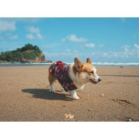 Baju Kucing Anjing Motif Hawaii - Merah, XL