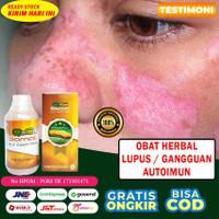 Obat Lupus / Autoimun Herbal Qnc Jelly Gamat 100% Asli Alami Testimoni