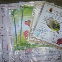sertifikat+microchip ikan arowana golden red original