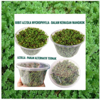 bibit azolla microphylla Benih indukan 100 gram