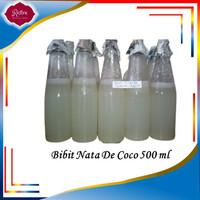 BIBIT NATA DE COCO-STARTER NATA DE COCO-BAKTERI ACETOBACTER XYLINUM