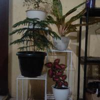 rak pot bunga besi tatakan pot tanaman - Putih