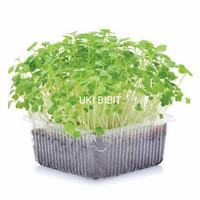 ( 100 Butir ) Benih Buckweat Microgreens