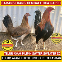 5 Butir Telur Fertil Ayam Pilipin Philipin Switer Sweater Kelso ASLI