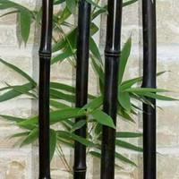 bibit bambu hitam/ batang