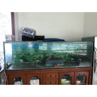 aquarium ukuran 200x50x60 tebal kaca 10mm