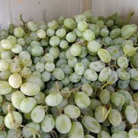 buah angur hijau fres