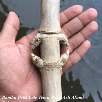 Bambu Pethuk Petil Lele Langka