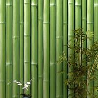 Wallpaper Sticker Dinding Motif Bambu Hijau Tua