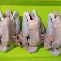 ayam pejantan 700-800g (hidup)