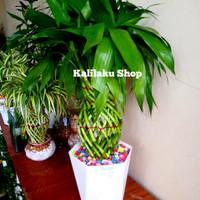 Bambu Hoki Kepang Guci satu Set / hiasan Meja / pajangan rumah / bambu