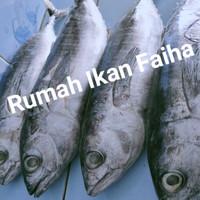 Ikan Baby Tuna Segar Beku 1kg