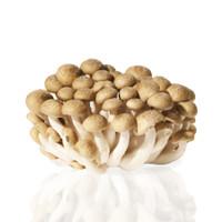 Jamur Bunashimeji / Brown Beech Mushroom / Hokto Bunashimeji 100gr