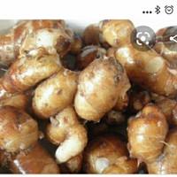 kencur (cikur) segar 50 gram