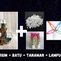 akuarium ikan cupang Unik / Aquascape / akuarium akar