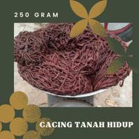 cacing tanah hidup 250 gram