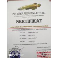 Sertifikat dan microchip chip Arwana arowana jardini / irian / batik