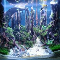 Aquarium Aquascape Full Set Design Tema Jungle # 2