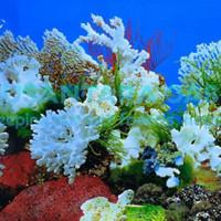 Background Gambar belakang aquarium akuarium tinggi 30cm harga per 10c