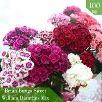 Benih Bibit Biji Bunga Sweet William Dianthus Anyelir Import