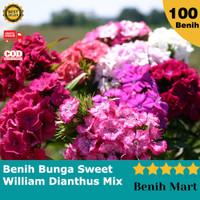 Bibit Benih Biji Bunga Anyelir Sweet William Dianthus Import