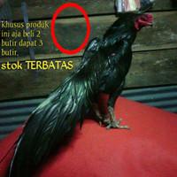 Ayam bangkok Aduan super pakhoy black asli telur fertil siap tetas